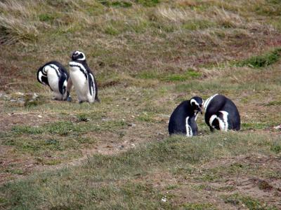 Punta Arenas e a pingüinera