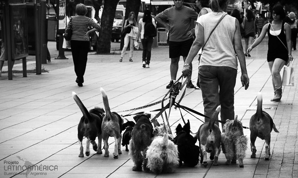 Passeando com cachorros em Buenos Aires, Argentina